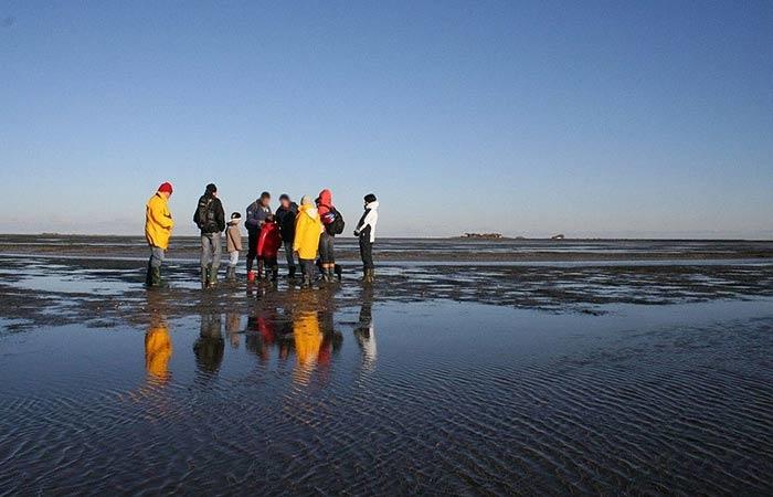 Wattexkursion der Schutzstation Wattenmeer auf Langeness