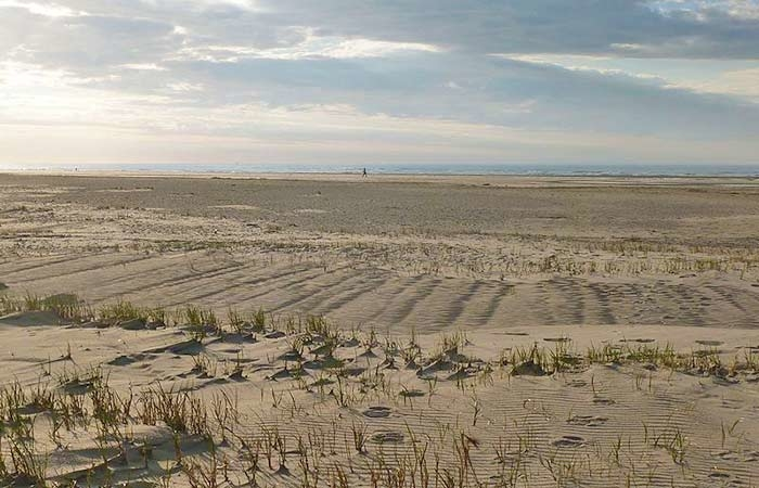 Dünenlandschaft mit Strandhafer auf der Nordseeinsel Spiekeroog im Nationalpark Niedersächsisches Wattenmeer