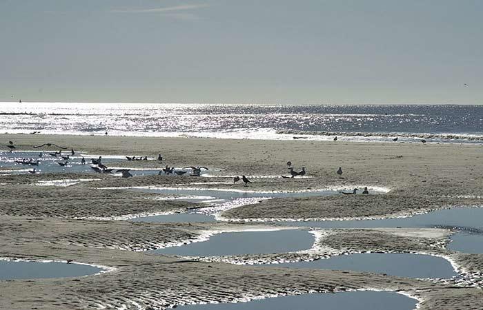Möwen am Strand auf der Insel Texel