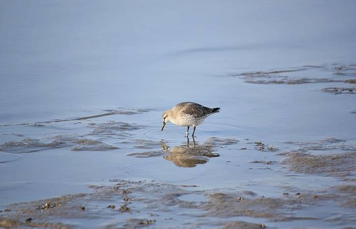 Vogel im Wattenmeer